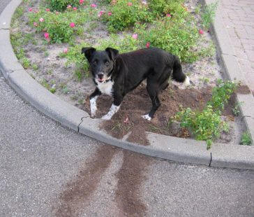 Outdoor Doggy Destruction