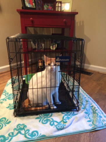 Crate Training for Cats?