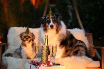 Doggy New Year Resolutions