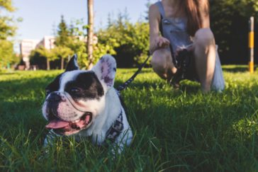 Are You Telling Your Dog To 'Banana?'