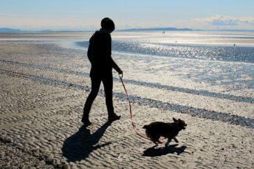 Dog Walking Etiquette