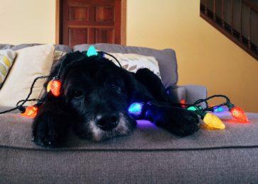 Keep Your Dog Busy on Christmas