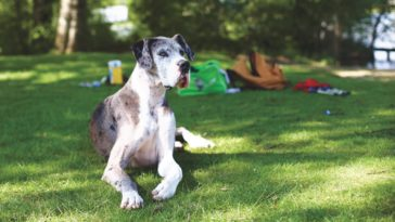 Is Your Dog Ruining Your Yard?