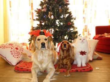 Pets As Gifts?