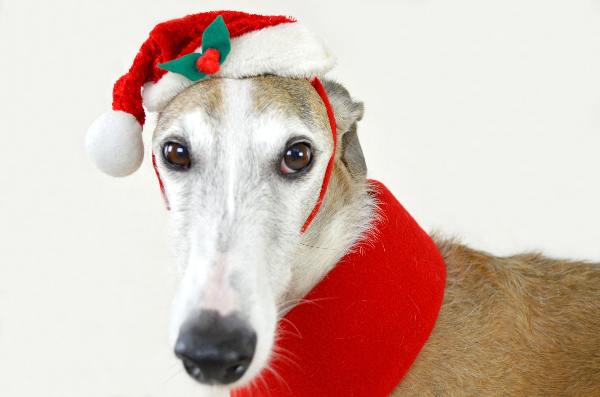 Holiday Tips for Dogs and Puppies---That You Haven\'t Heard Before!